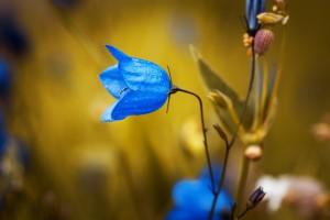 blauw-bloemetje